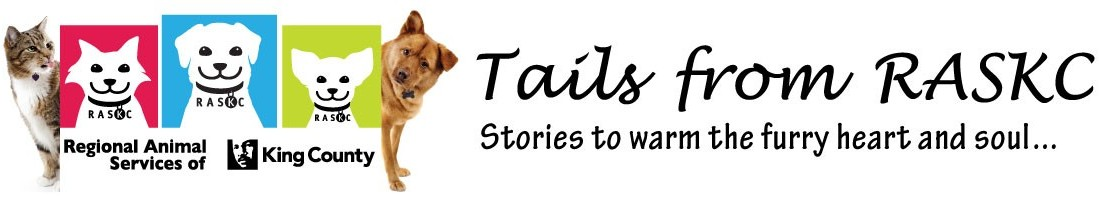 Tails from the Community: Girl Scout Troop 43810