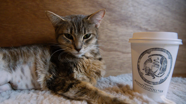 Wallingford Cat Cafe