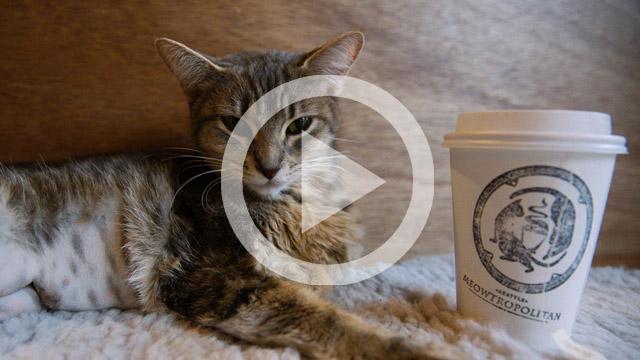 times-meowtropolitan-play-video