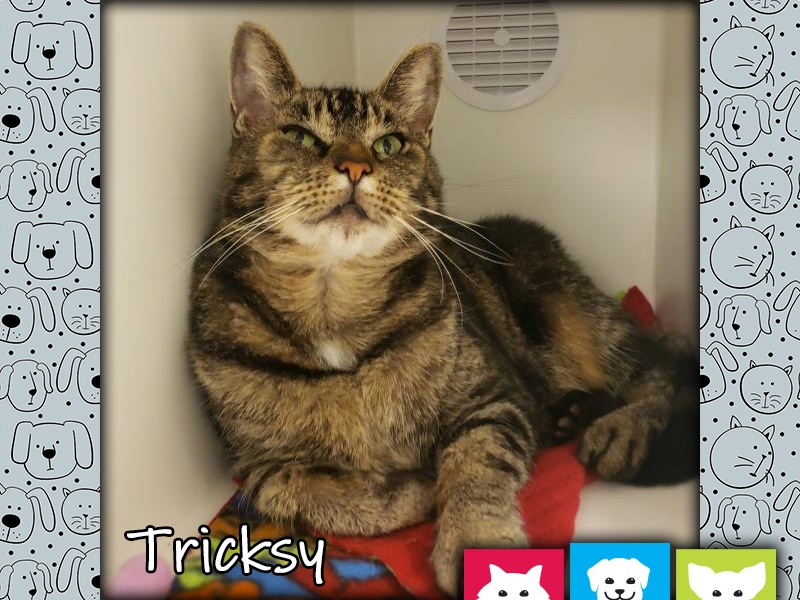 Pet of the Week Tricksy