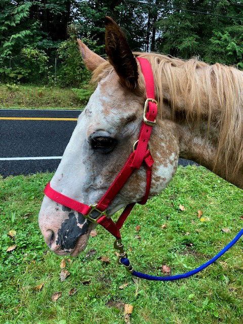 Help needed to find owner of starved horse | Tails from RASKC