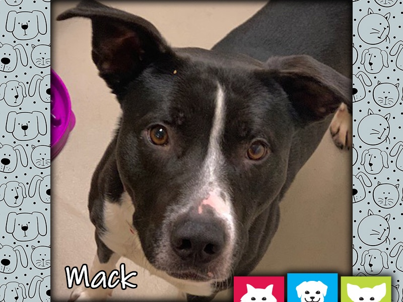 Mack the dog, Pet of the Week
