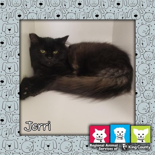 Jerri, Pet of the Week