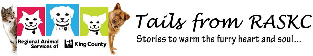 Tails from the Community: Kye's painted rocks